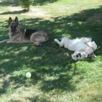 Relaxing at the K9 to 5 Doggie Day care