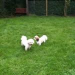 Cooper & Tiffy