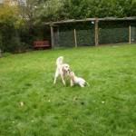 Daisy & Tess playing