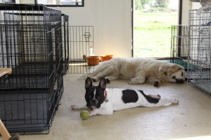 insdie doggie day care
