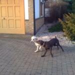 Oscar&Lola