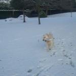 Tess in snow