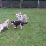 Yiska, Harry, Brodie & Tiffy
