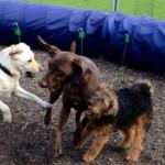 social-dogs